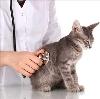 Ветеринарные клиники в Котласе